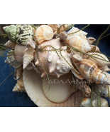 Seashell Soap Jewelry Dish Functional Home Table Accent~Bathroom Boudoir... - $55.00