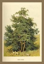 Box Tree by W.H.J. Boot - Art Print - $19.99+