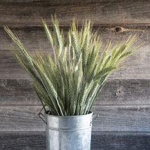 Highlander Ornamental Grass Seed  / Lowlander Grass  Flower Seeds - $17.00