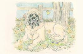 Sweet Mastiff Puppy - $25.00