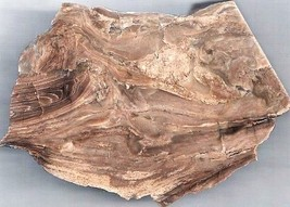 Petrified Wood 7 Specimen Slab Cabbing Rough - $12.30