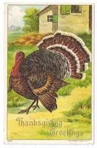 1908 Thanksgiving Postcard Julius Bien Big Tom Turkey 9204 Vintage Embossed - $5.50