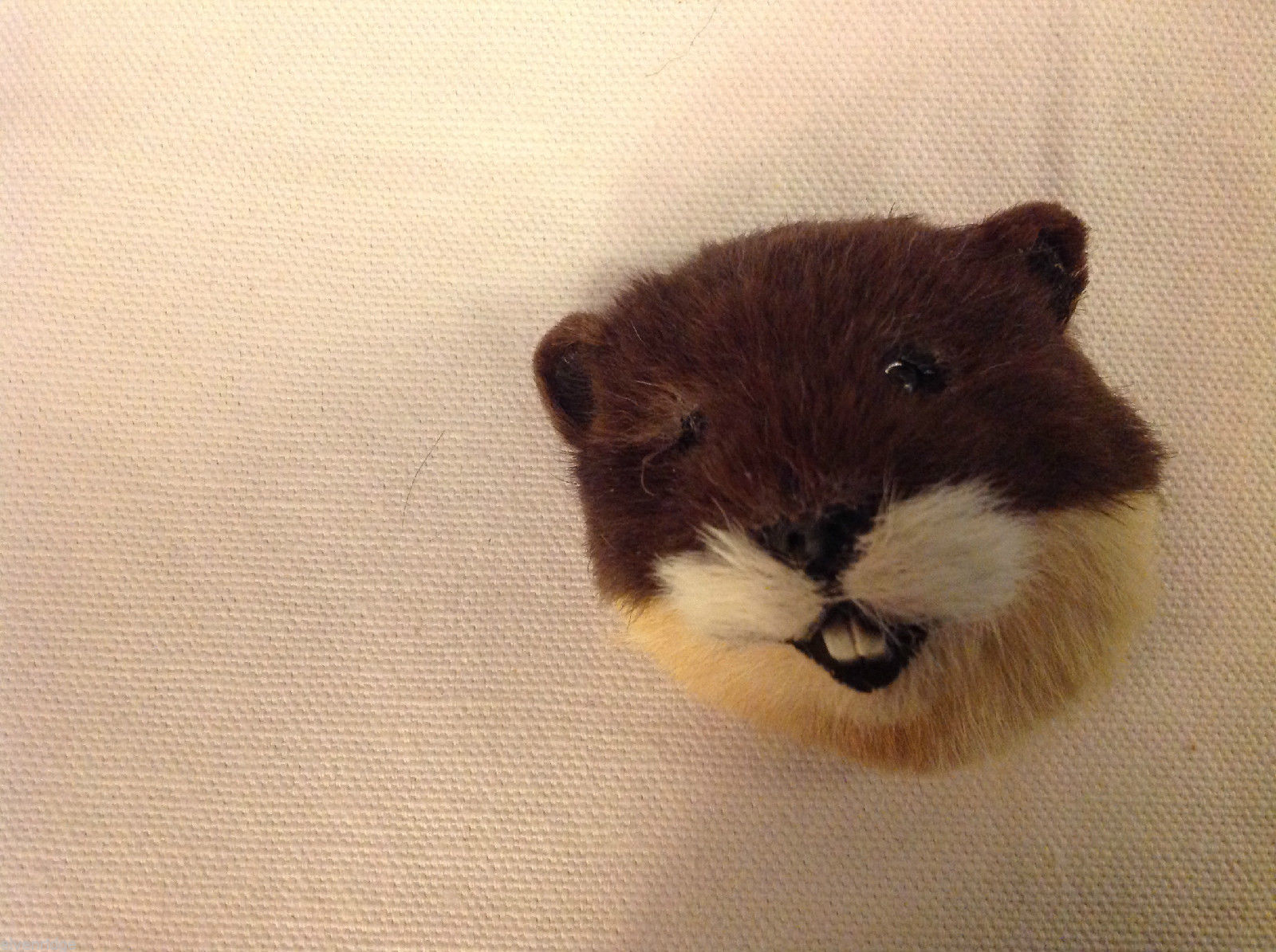 Beaver   furry refrigerator magnet in 3D