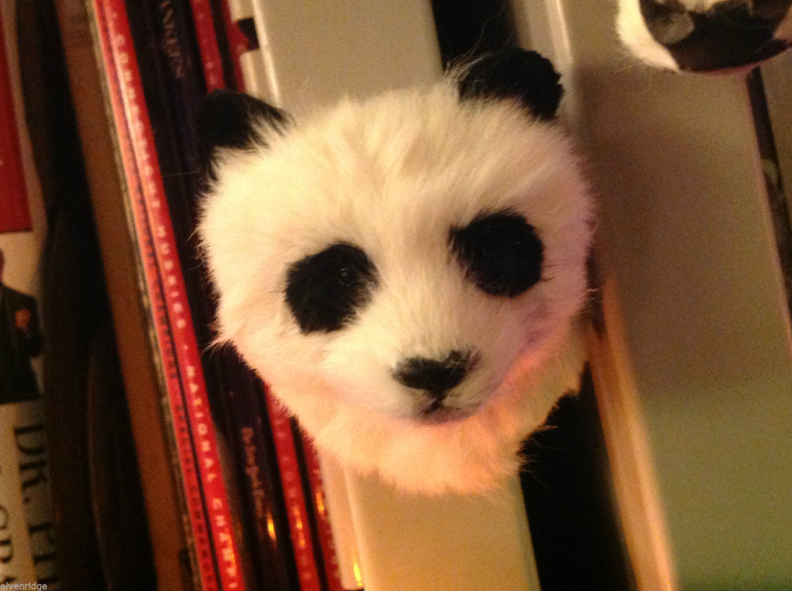 White and black panda bear   furry refrigerator magnet in 3D