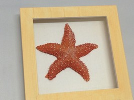 NEW Orange and Red Resin Starfish Shadow Boxes image 2