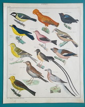 BIRDS Pigeon Lark Tanager Finch Bunting Crossbill Indigo - 1843 HC Color... - $21.60