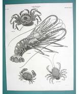 CRUSTACEA Crabs Genus Cancer - 1820 ABRAHAM REES Print - $21.42