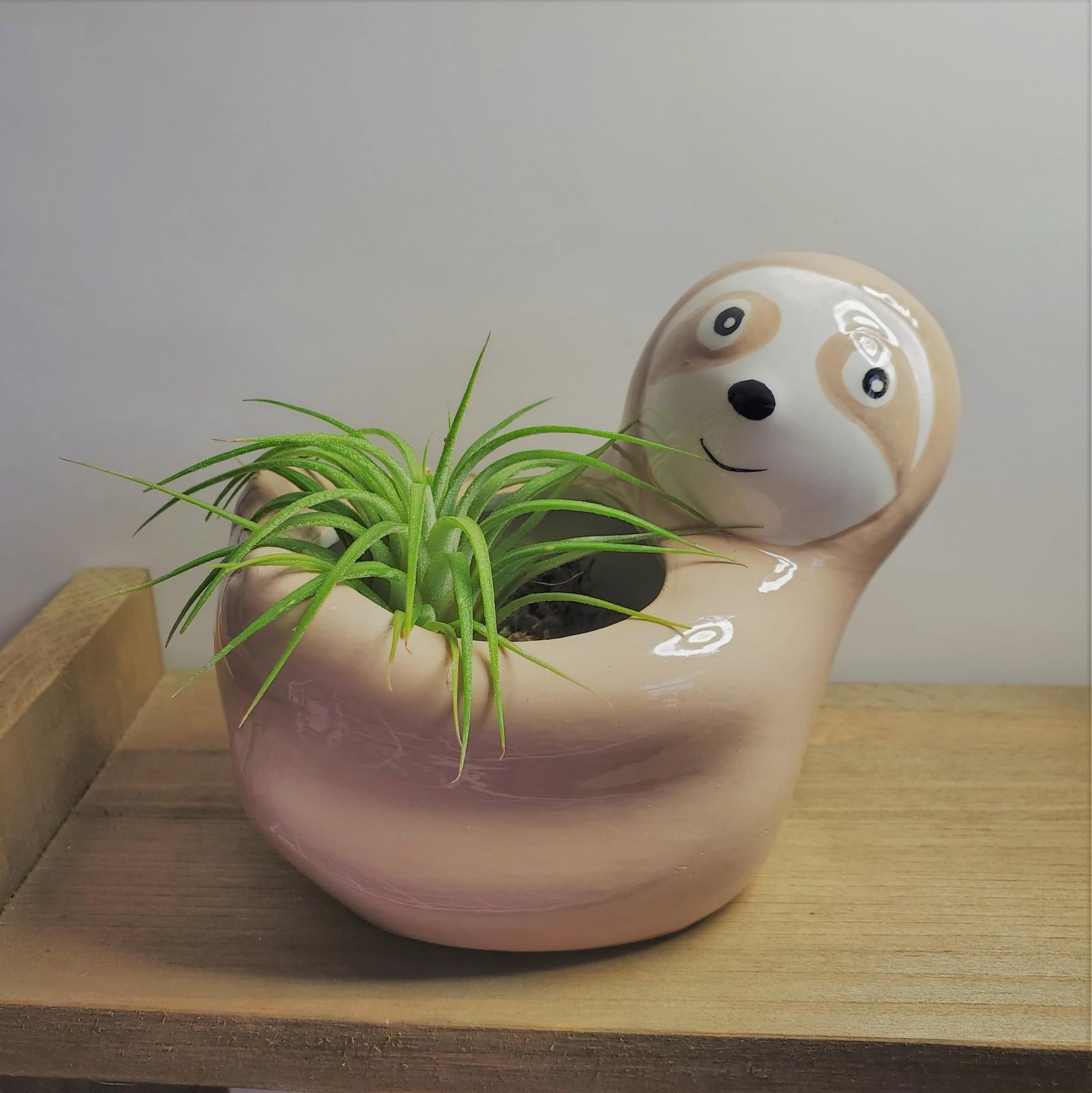 Sloth airplant 1