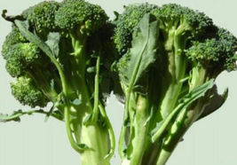 28g Calabrese Broccoli Seeds ~4000ct ~Green Sprouting ~Delicious Staple Food - $14.99