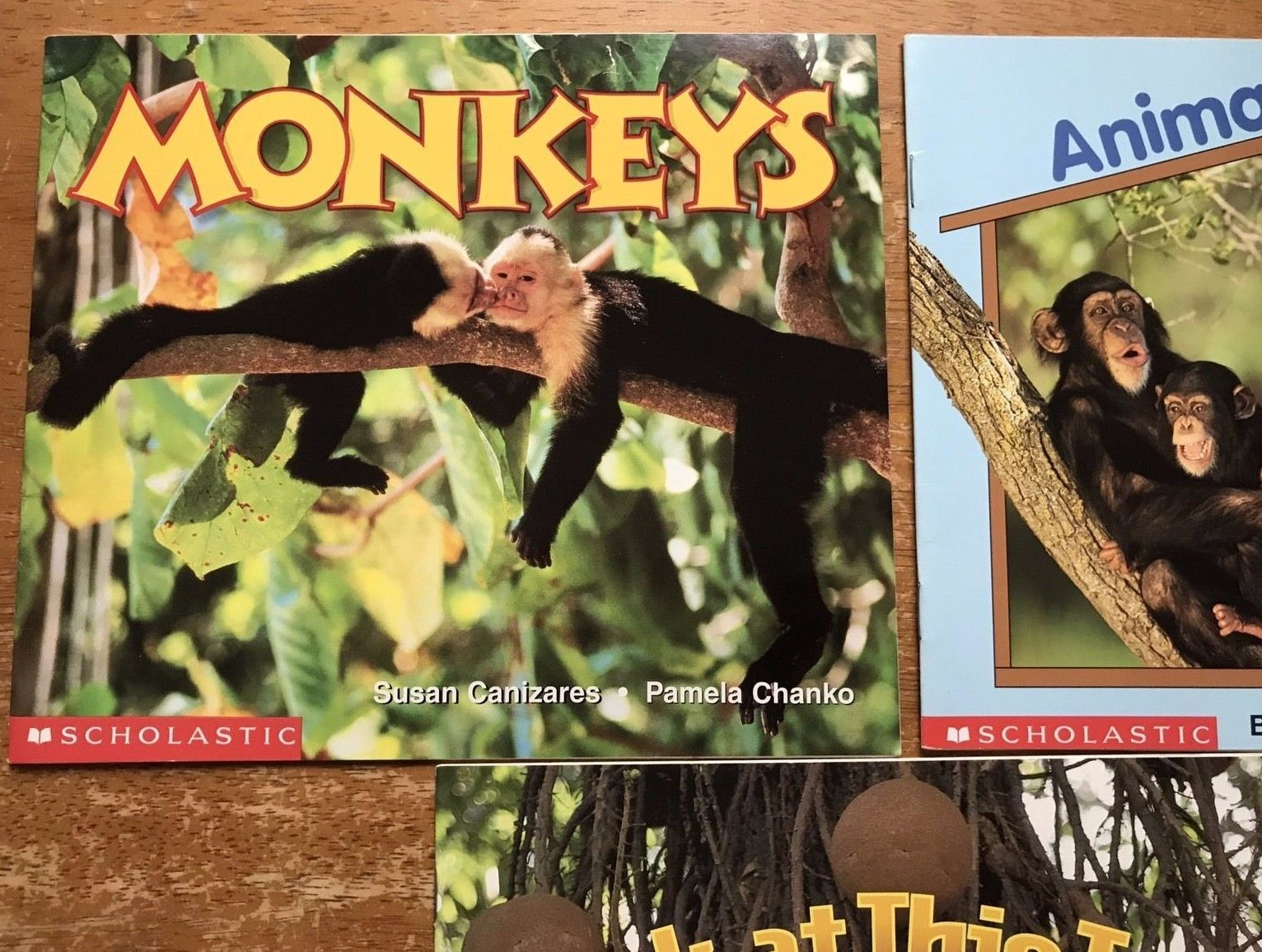 Lot 3 Paperback Books Science Vocabulary Readers Scholastic Animal and Tree Unit