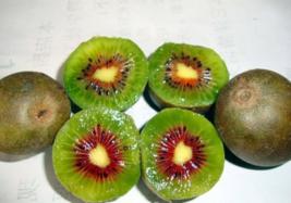 BEST PRICE 50 Seeds 100% True Variery Mini Large Kiwi,DIY Fruit Seeds E3... - $4.99