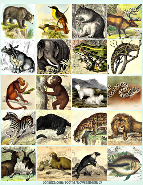 """jungle forest animals printable collage sheet clipart digital download 2"""" square"""