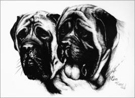 Two Mastiff Heads - $20.00