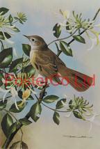 Nightingale & Wild Honeysuckle - Basil Ede - Royle 1975 - Framed Vintage... - $51.00