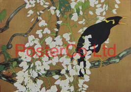 Japanese Black Mynah and Wisteria (Oriental Art... - $51.00