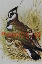 "Lapwing - Basil Ede - Royle 1975 - Framed Vintage Poster Print - 16""H x ... - $51.00"