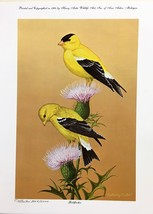 Goldfinches By Harry Antis - $135.00