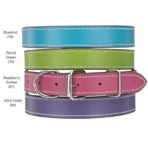 Casual Canine Flat Leather Dog Collar, 14-18-Inch, Parrot Green - $8.76