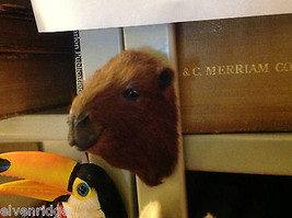 Brown camel   furry refrigerator magnet in 3D