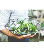Geometric Glass Terrarium Container Handmade Mo... - $101.99
