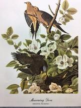 Mourning  Dove By James Audubon - $40.00