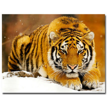 Tiger Animals Poster Children Room Decor 32x24 - $13.95