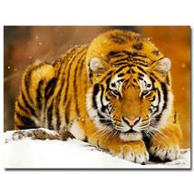Tiger Animals Poster Children Room Decor 32x24 - $13.95