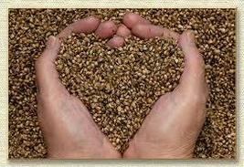 Haunted Emergency 911 SEEDS of LOVE spell cast potent and powerful supernatural - $30.00