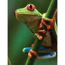 Masterpieces Animal Planet Tree Frog Puzzle (100-Piece) [Toy] - $6.14
