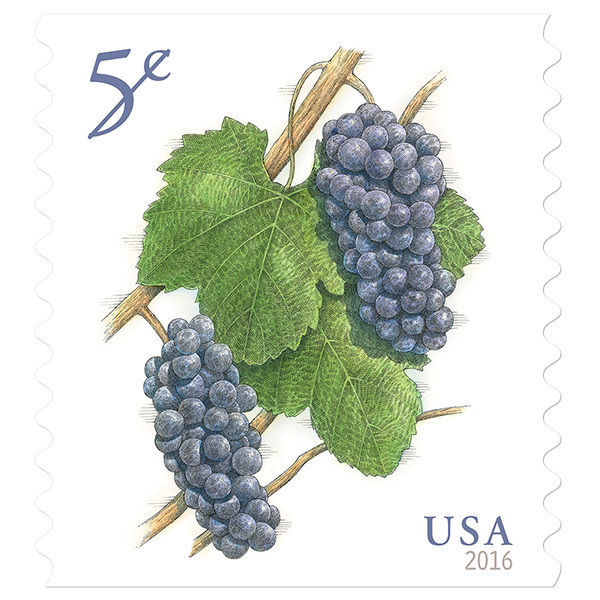 2016 5c Deep-Purple Pinot Noir Grapes, Coil Scott 5038 Mint F/VF NH image 1