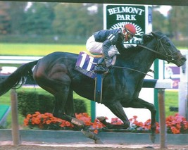 PLEASANT HOME 8X10 PHOTO HORSE RACING PICTURE JOCKEY BREEDERS' CUP - $3.95