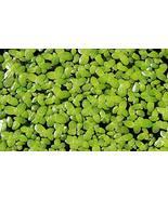 200 Live Duckweed Plants (LEMNA Minor) - $11.88