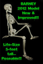 Life Size--BARNEY SKELETON--Human Skull Cheap Halloween Prop Building De... - $89.07