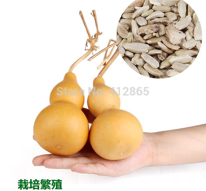 2grains/bag Mini Bottle Gourd Seeds, Original Package Novel Plant Finger,L=5-6cm image 2