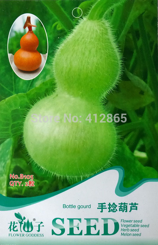 2grains/bag Mini Bottle Gourd Seeds, Original Package Novel Plant Finger,L=5-6cm image 3