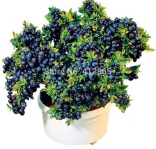 Blueberry fruit seeds, tree seeds, 200 particles / bag fruit bonsai tree - $5.25