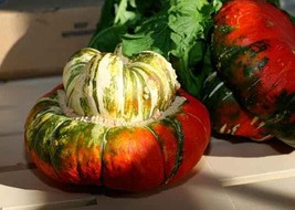 Turk's Turban Winter Squash 10 Seeds Turks Cap Heirloom Ornamental Gourd... - $2.39