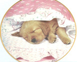 Golden Retriever Collector Plate Puppy Portraits Do Not Disturb Hamilton Dog