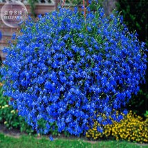 200 seeds Lobelia Blue Hanging Bonsai Flower Seeds perennial - $3.11
