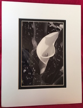 "Photograph:matted ""Single Calla Lily""(B&W, metallic photo paper), 11""x14... - $16.50"