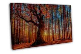 Autumn Forest Path Sunshine Landscape 16x12 FRAMED CANVAS Print - $22.46
