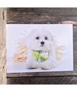 Maltese Greeting Cards 10 Pack Dog Pet All Occasion Blank Message Puppy Gift Box - $18.80