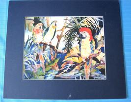 """Parrots Tropical Birds Art Print Artist Judy Richards 12"""" X 14"""" Matted - $30.28"""