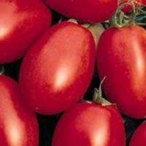 1/4 Oz Seeds of Porter Tomato - $28.71