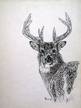 ORIGINAL ACEO Pen and Ink #2 Deer Art Print -: rdoward fine art - $5.94