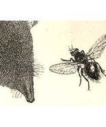 CARRION BEETLES AND FLIES 1800s Wood Engraving Plate - $35.00