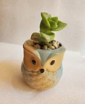 "Succulent in Ceramic Owl Planter, Crassula String of Buttons, 2.5"" Animal Pot image 5"