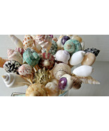 6 inch Large Seashell Party Toothpicks Skewers Picks Shells Beach Themed... - $9.99