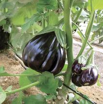 100pcs  'Black Beauty' Black Eggplant Vegetable Seeds,Tasty Edible IMA1  - $13.98