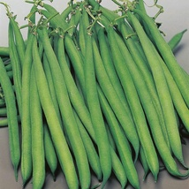 Beans Seed 15 Seeds French Bean Kidney Bean Phaseolus Green Vegetables Seed C120 - $13.58